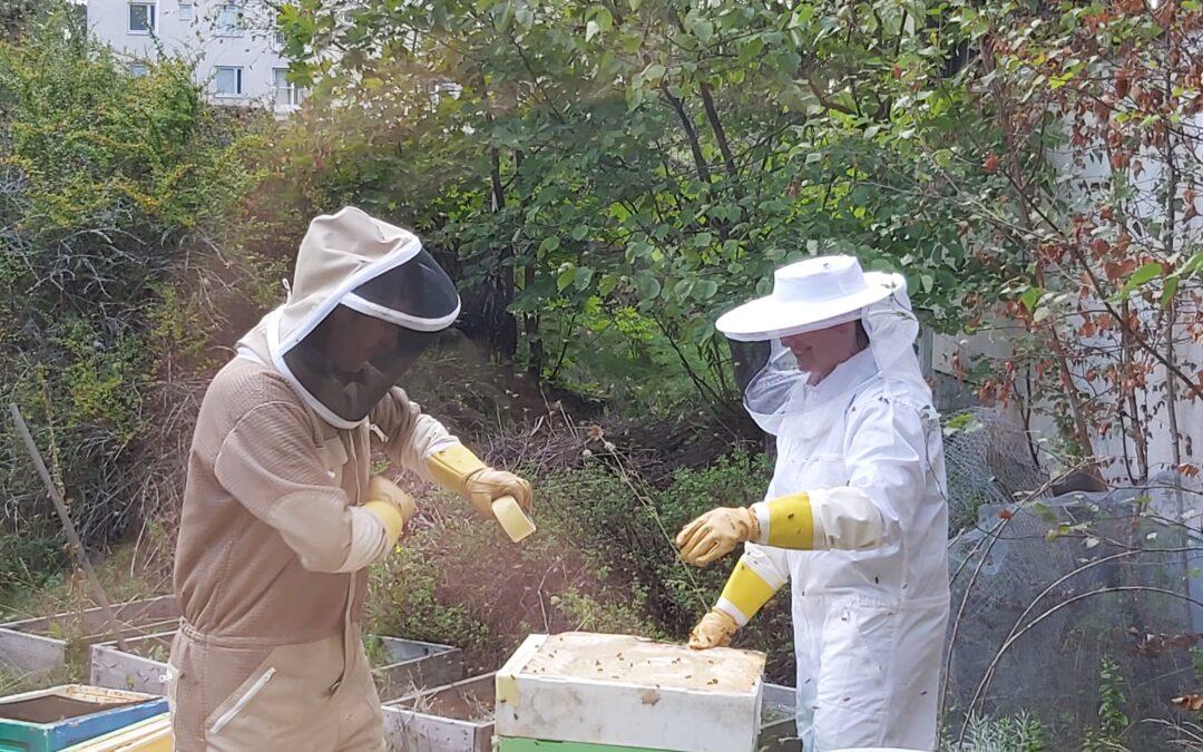 La récolte du miel a commencé !