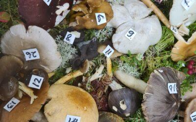 Exposition de champignons au primaire